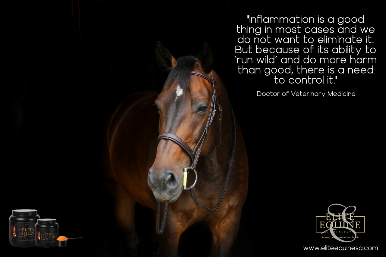 1-Feb-2019-Elite-Equine-and-Inflammation