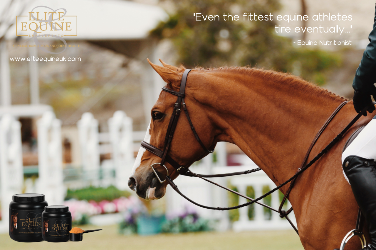 1-November-2019-Elite-Equine-and-Antioxidant-us-in-Equine-Athletes