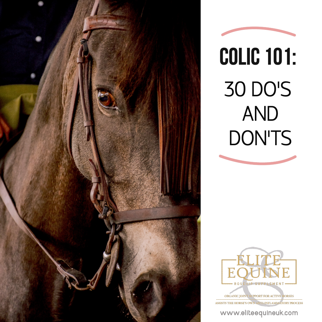 10-January-2020-Elite-Equine-and-Colic-101