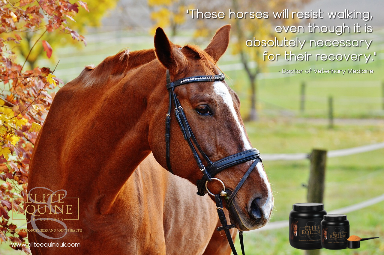 13-December-2019-Elite-Equine-and-Swelling-That-is-More-Than-Just-Swelling