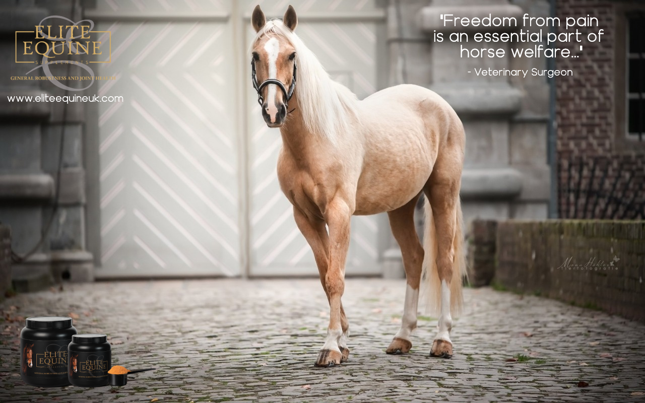 13-September-2019-Elite-Equine-and-Pain-Management-in-Horses