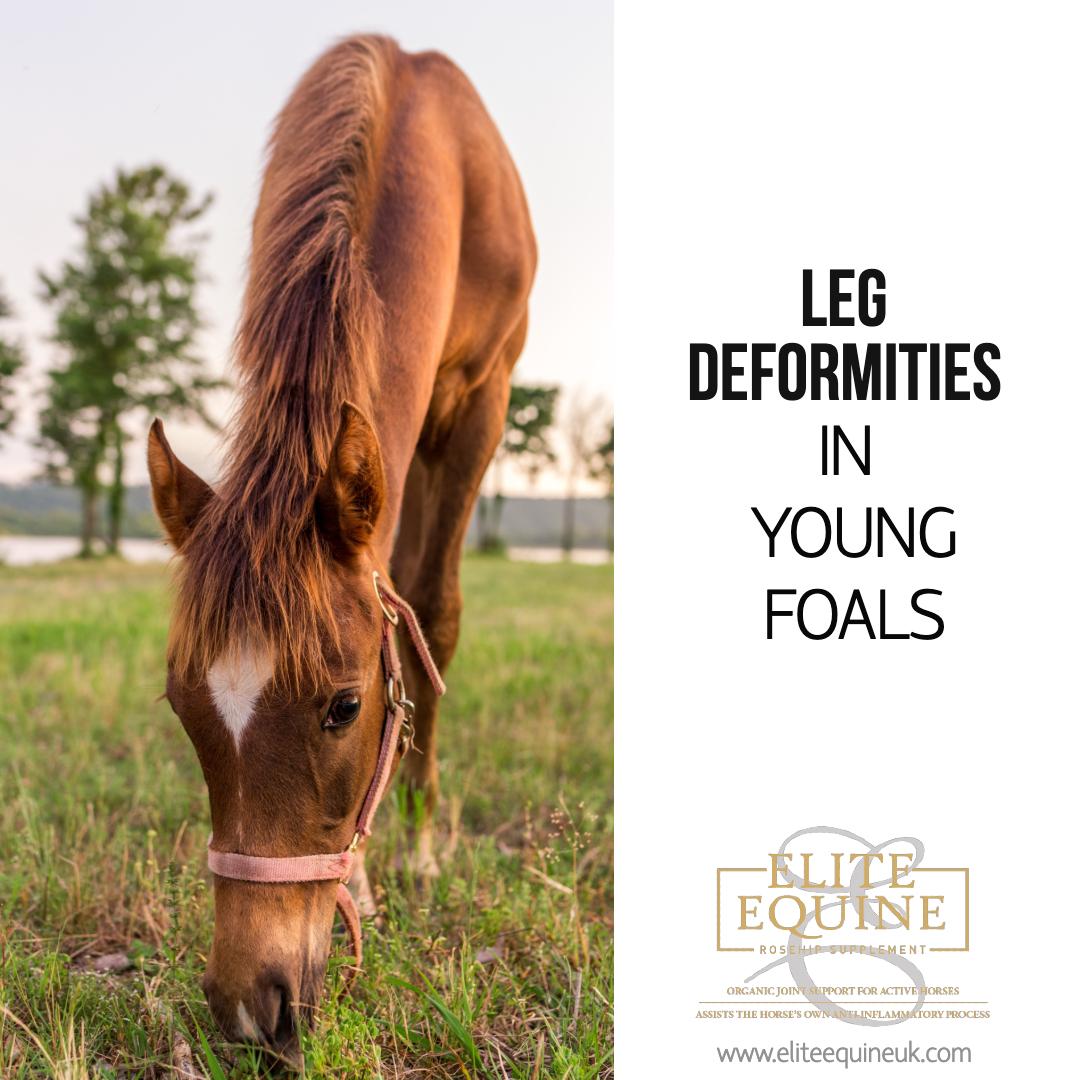 17-January-2020-Elite-Equine-and-Leg-Deformities-in-Young-Foals-1