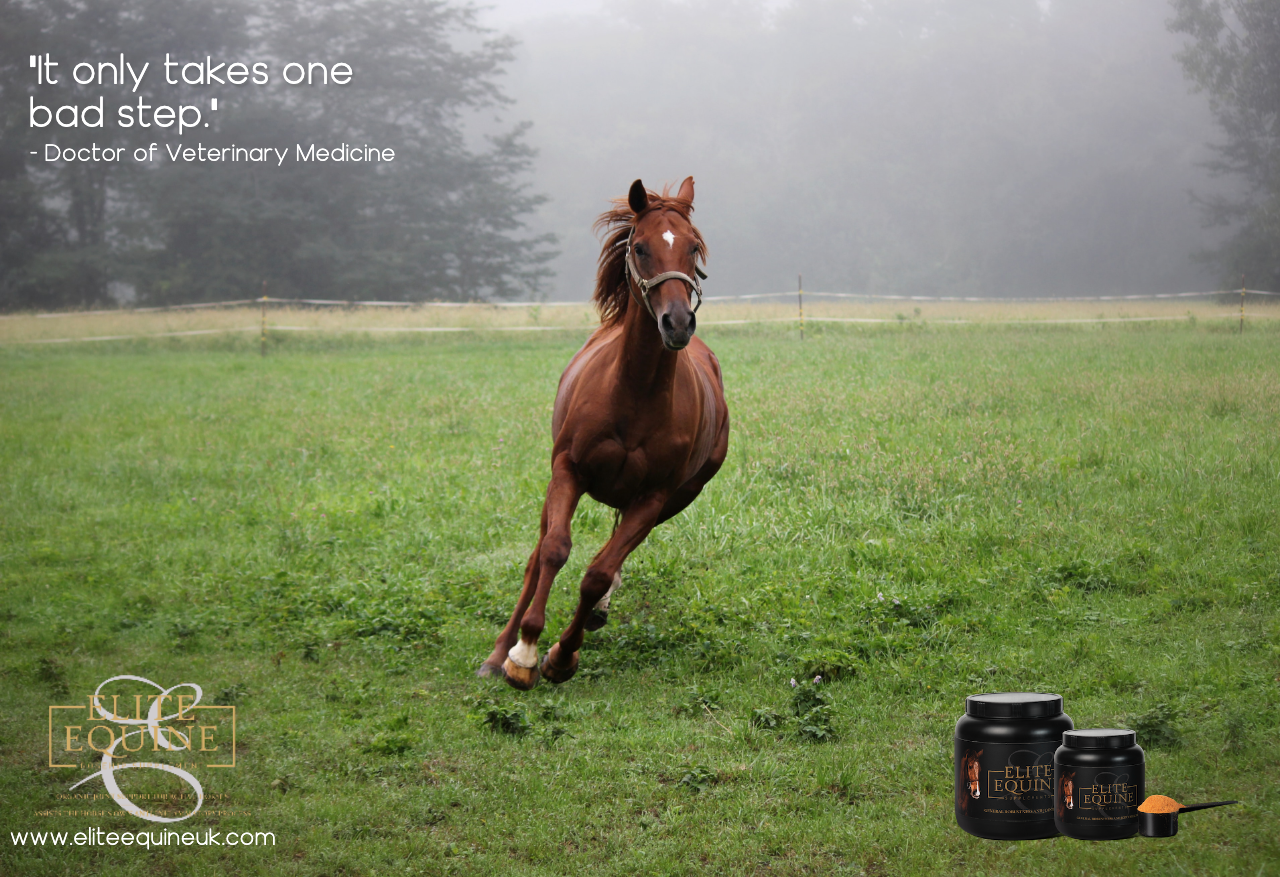 20-December-2019-Elite-Equine-and-Stages-of-Healing-in-Soft-Tissue-Injury