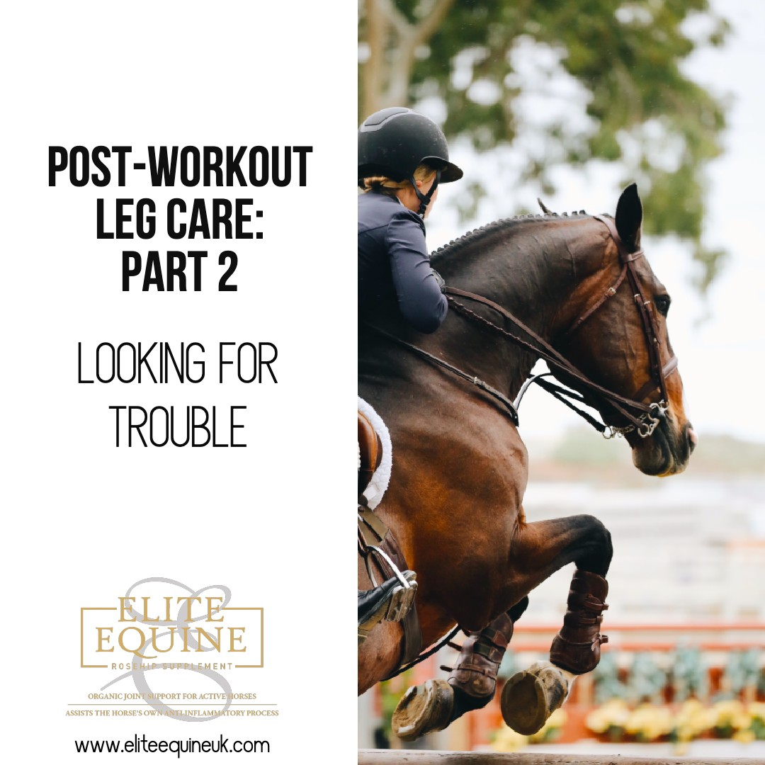 20-March-2020-Elite-Equine-and-Looking-for-Trouble
