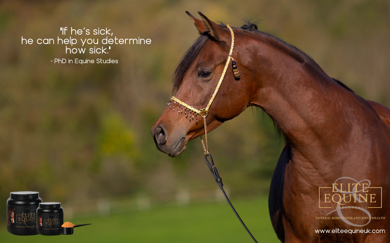 23-August-2019-Elite-Equine-and-6-signs-of-Sickness