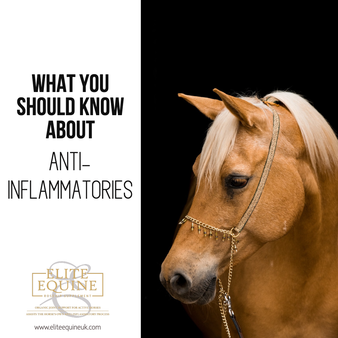 24-January-2020-Elite-Equine-and-What-You-Should-Know-About-Anti-Inflammatories