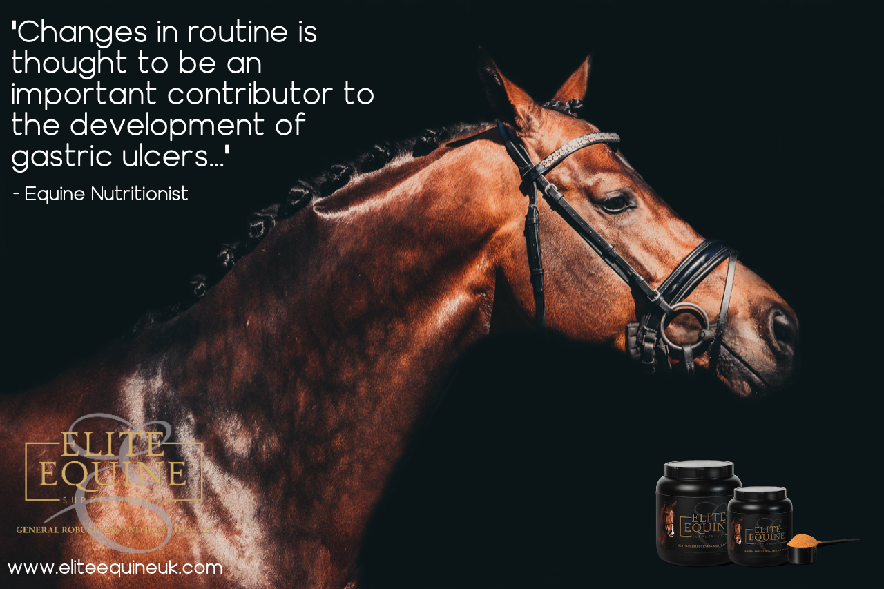 29-November-2019-Elite-Equine-and-The-Likelihood-of-Your-Horse-Developing-a-Gastric-Ulcer