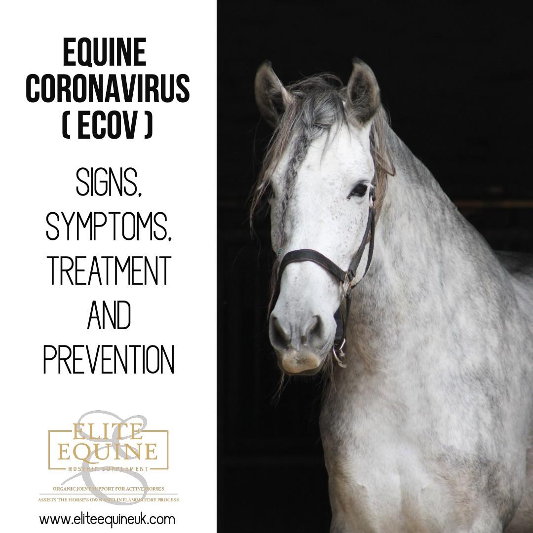 Elite-Equine-and-Equine-Coronavirus-