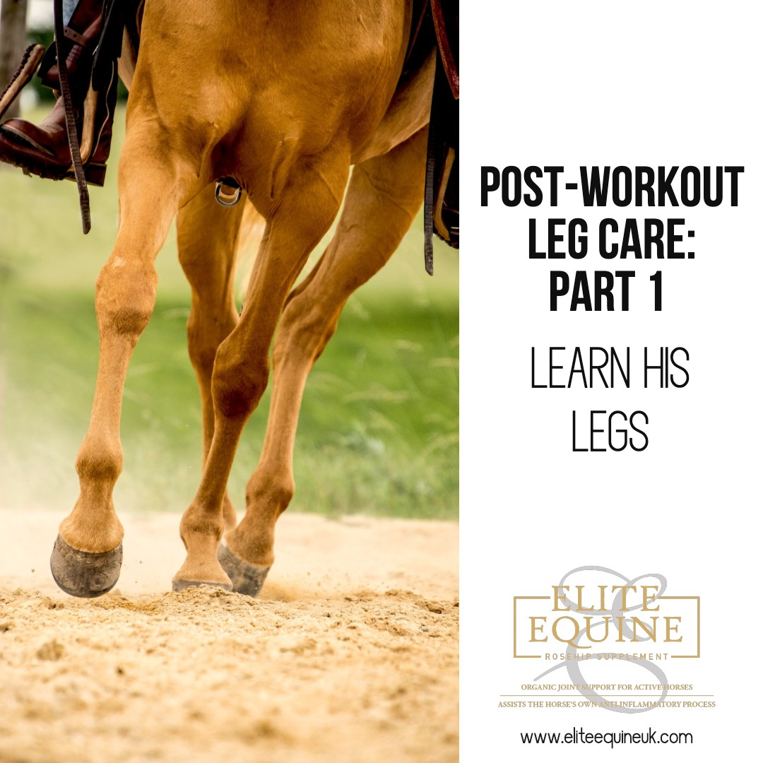 Elite-Equine-and-Post-workout-Leg-Care_Part-1