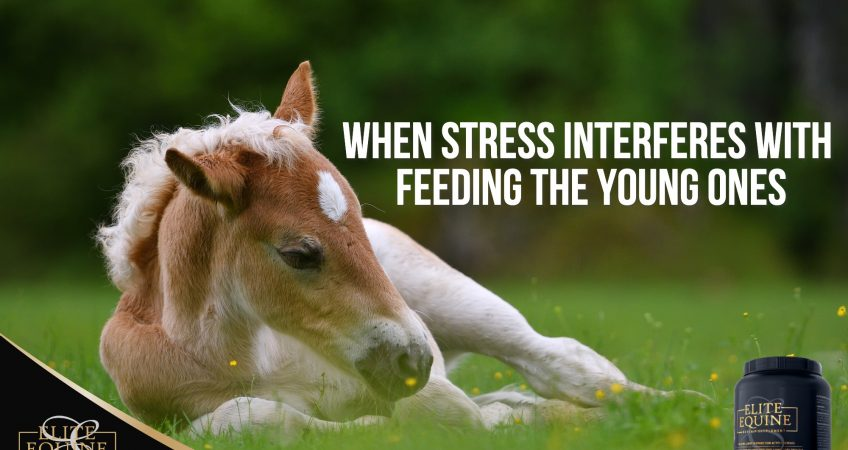 10-July-2020-Elite-Equine-and-When-stress-interferes-with-feeding-the-young-ones