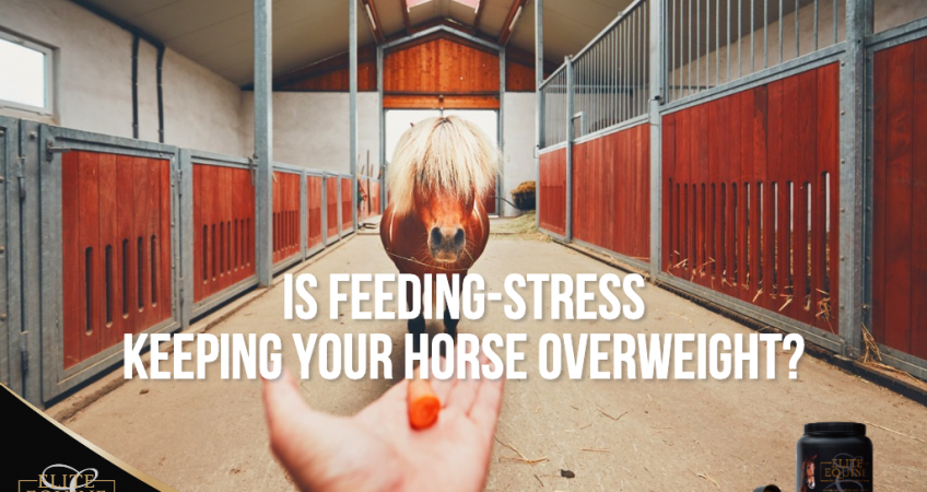 14-August-2020-Is-feeding-stress-keeping-your-horse-overweight