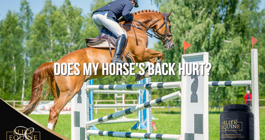 17-July-2020-Elite-Equine-and-Does-My-Horse-s-Back-Hurt-1