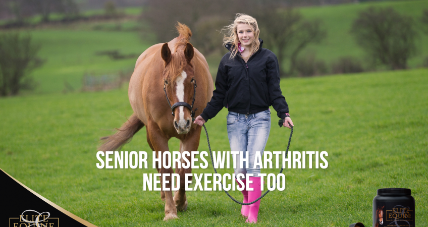 31-July-2020-Elite-Equine-and-Senior-Horses-with-Arthritis-need-exercise-too
