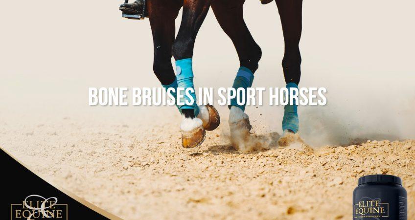 Elite-Equine_Post-3-Bone-bruises