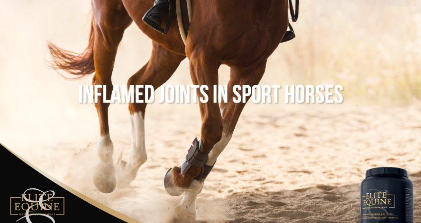Elite-Equine_Post-4-Inflamed-joints