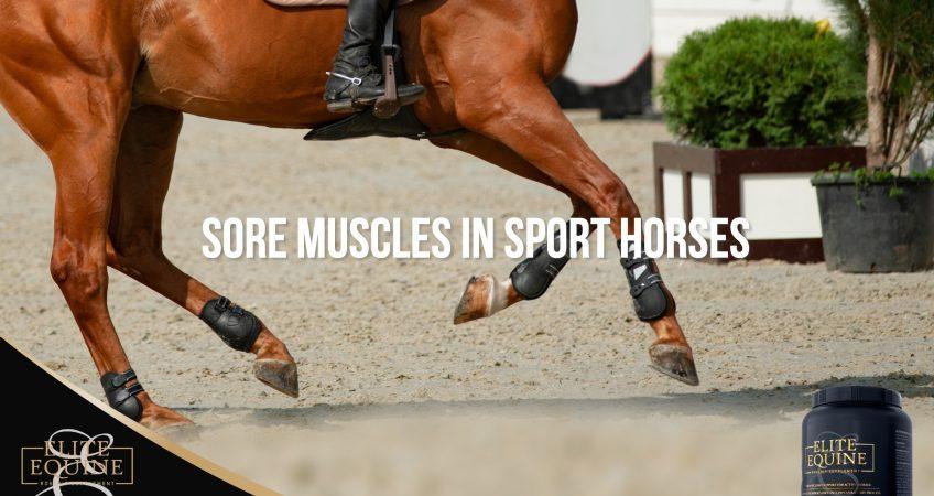 Elite-Equine_Post-5-Sore-muscles